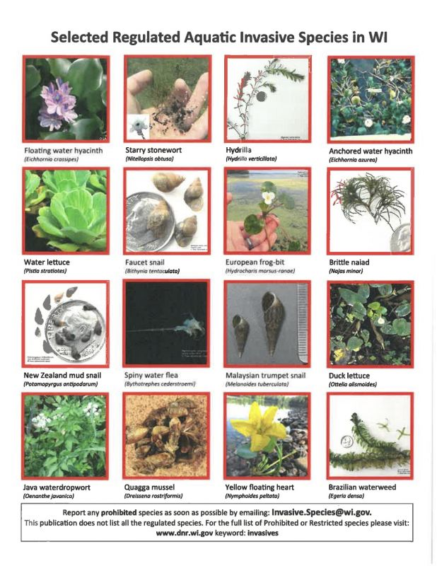 Selected Regulated Aquatic Invasive Species in WI
